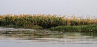 Okavango River. River bank of the Okavango in Botswana Royalty Free Stock Photo