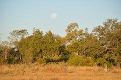 Okavangodelta  Stock Foto's