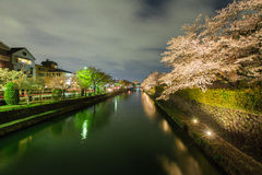 Okazaki canal with sakura tree Stock Images