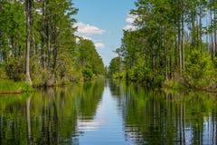 Okeefenokee全国野生生物保护区运河 库存照片