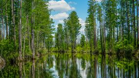 Okeefenokee全国野生生物保护区运河 库存图片