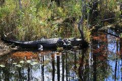 """Okefenokee沼泽公园立即运输您入一个史前环境,居住于由居住的恐龙†""""我们的Al 免版税库存图片"""