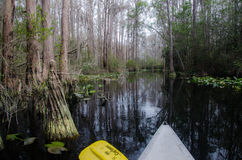 Okefenokee Canoe Paddle. Paddling through Cypress and Spanish Moss in the Okefenokee Swamp Royalty Free Stock Photo