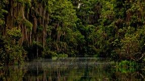 Okefenokee-Stille des Sumpfs Lizenzfreies Stockfoto