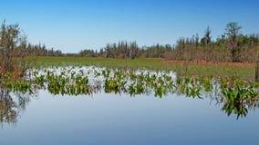 Okefenokee-Sumpf, Georgia, Vereinigte Staaten lizenzfreies stockfoto