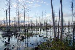 Okefenokee Swamp Sunset Stock Photo