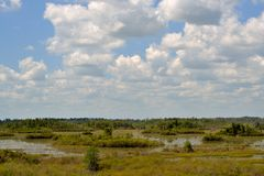 The Okefenokee Swamp. A view of the swamp from a tower Royalty Free Stock Images