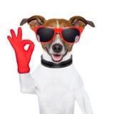 Oken fingrar hunden Royaltyfri Fotografi