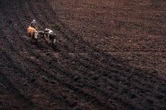 Oket av kor som plogar jordningen royaltyfria foton