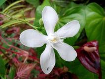 Okid kwitnie w naturalnym sri lance fotografia stock