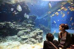 Okinawa Aquarium royalty free stock photo