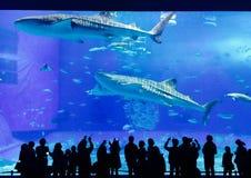 Okinawa Aquarium foto de stock royalty free