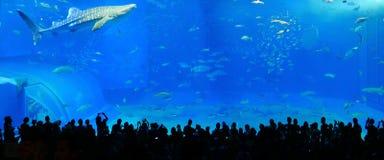 Okinawa aquarium stock photo