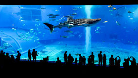 Okinawa Churaumi Aquarium, l'Okinawa Photo libre de droits