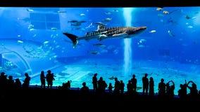 Okinawa Churaumi Aquarium, Okinawa Royalty Free Stock Photo