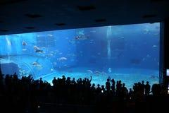 OKINAWA - 9 DE OCTUBRE: Okinawa Churaumi Aquarium en Okinawa, Japón el 9 de octubre de 2016 Foto de archivo libre de regalías