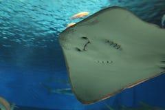 OKINAWA - 9 DE OCTUBRE: Okinawa Churaumi Aquarium en Okinawa, Japón el 9 de octubre de 2016 Imagenes de archivo