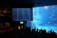 OKINAWA - 9 DE OCTUBRE: Okinawa Churaumi Aquarium en Okinawa, Japón el 9 de octubre de 2016 Foto de archivo