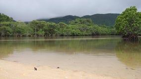 Okinawa, Japón - 2 de junio de 2019: Bosques del mangle a lo largo del río de Fukidou, Ishigaki, Okinawa, Japón almacen de metraje de vídeo