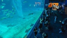OKINAWA, JAPAN - 20. April 2017: Okinawa Churaumi Aquarium, Oki Lizenzfreie Stockfotografie