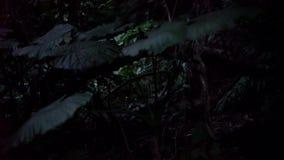 Live-action fireflies or glowflies or lightning bugs in Ishigaki island, Okinawa, Japan. stock footage