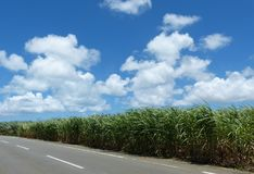 Okinawan Sugar Fields Images stock