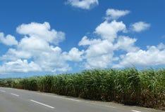 Okinawan Sugar Fields Stock Images