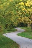 Okkernootbomen in Herfstpark, Groot Gedetailleerd Verticaal Gemodelleerd Autumn Path Scene, die Tarmacgang verdraaien, Windend As Royalty-vrije Stock Fotografie