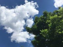 Okkernootboom tegen bewolkte hemel stock foto's