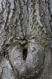 Okkernootwijfje op de boomstam royalty-vrije stock afbeeldingen
