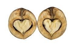 Okkernoten - als harten Stock Afbeeldingen