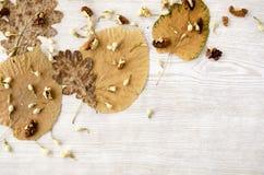 Okkernoten met bladeren op witte rustieke lijst Stock Afbeelding