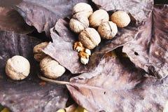 Okkernoten op donkere droge bladeren oogst stock afbeeldingen