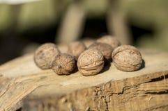 Okkernoten op een rustiek hout Stock Afbeeldingen