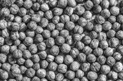 Okkernotenachtergrond in zwart-wit Royalty-vrije Stock Foto