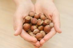 Okkernotenhazelnoten in de palm van hand stock fotografie