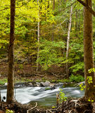 Oklahoma Forest. A river running through an Oklahoma forest royalty free stock image