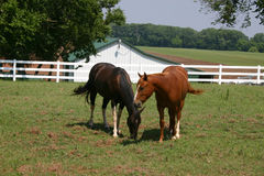 Oklahoma Horses. A photograph taken of horses in Oklahoma royalty free stock images