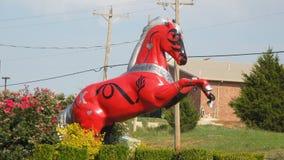 Oklahoma konia wszystko przez cały stanu Obrazy Stock
