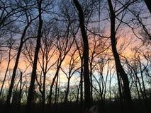Oklahoma lasu zmierzch Zdjęcia Stock