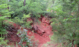Oklahoma red dirt in the forest in summer Stock Images