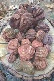 Oklahoma Rose Rocks Arkivbild