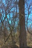Oklahoma Trees Stock Photos