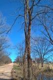 Oklahoma Trees Stock Photography