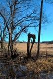 Oklahoma Trees Royalty Free Stock Photography