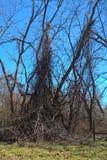 Oklahoma Trees Stock Images