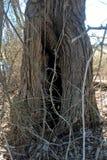 Oklahoma Trees Royalty Free Stock Image