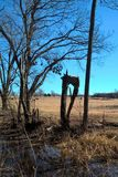 Oklahoma Trees. It`s been almost three years since an F-4 tornado came through this rural Oklahoma countryside. Oklahoma, sometimes referred to as tornado ally Royalty Free Stock Photography