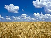 Oklarheter över ett fält av korn Royaltyfria Bilder