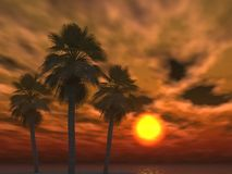 oklarheter gömma i handflatan den tropiska solnedgången Royaltyfri Bild